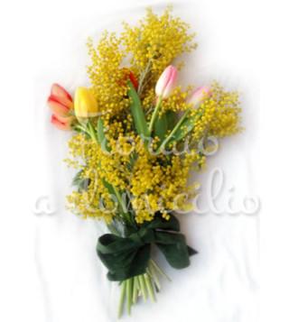 mimose-tulipani