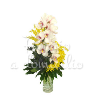 orchidee-mimose