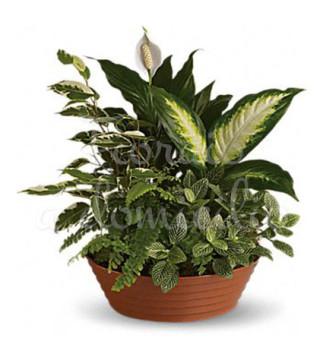 piante-miste