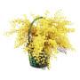 cesto-di-mimosa