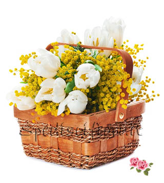 cesto-tulipani-bianchi-con-mimosa