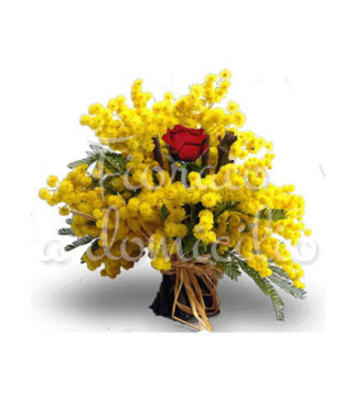 mimose-rosa-rossa