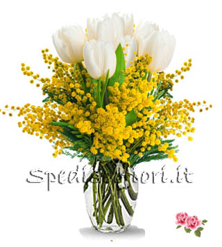tulipani-bianchi-con-mimosa