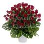 50-rose-rosse1