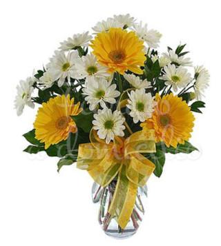 bouquet-di-gerbere-gialle-e-margherite-bianche