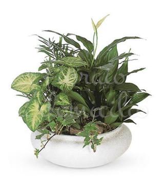 composizione-di-piante-miste