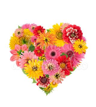 cuore-di-gerbere-e-fiori-colorati